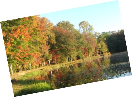 lake-and-trees
